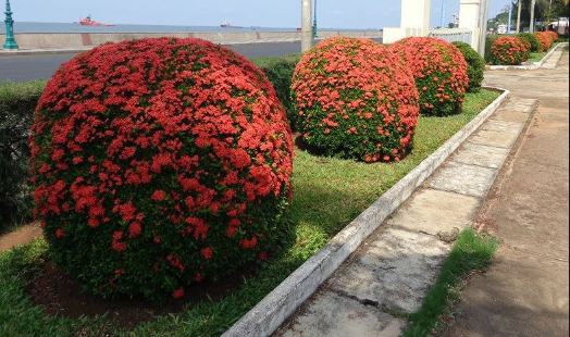 Cung cấp cây có hoa