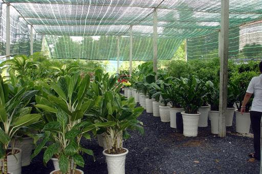 Cung cấp cây xanh An Khang