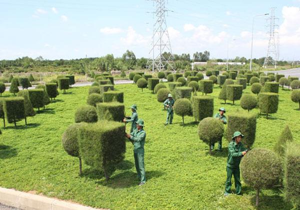 Dịch vụ chăm sóc cây xanh Tiền Giang