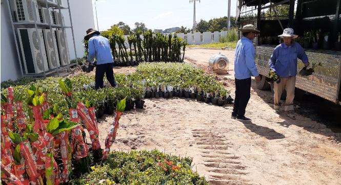 Trồng chăm sóc cây xanh An Khang