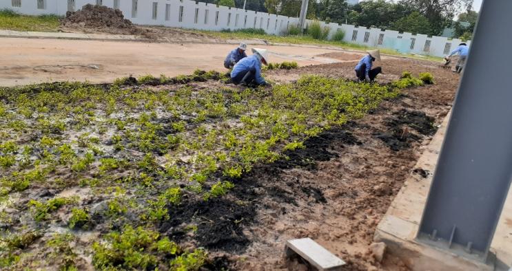 Trồng cỏ khu công nghiệp An Khang