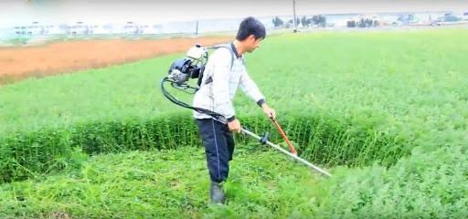 Công việc phát hoang cỏ dại
