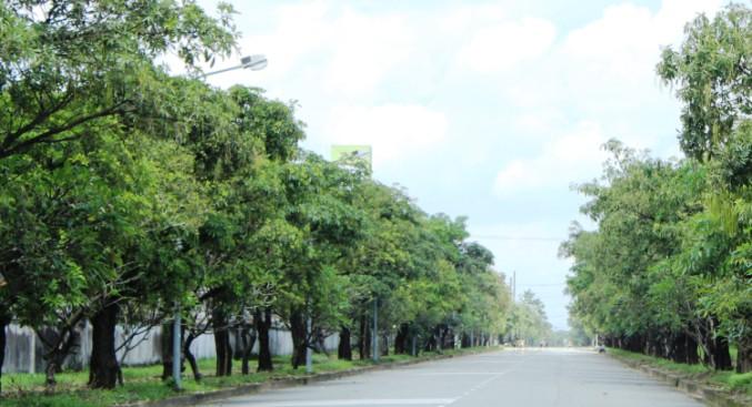 Dịch vụ chăm sóc cây xanh khu công nghiệp Mỹ Tho