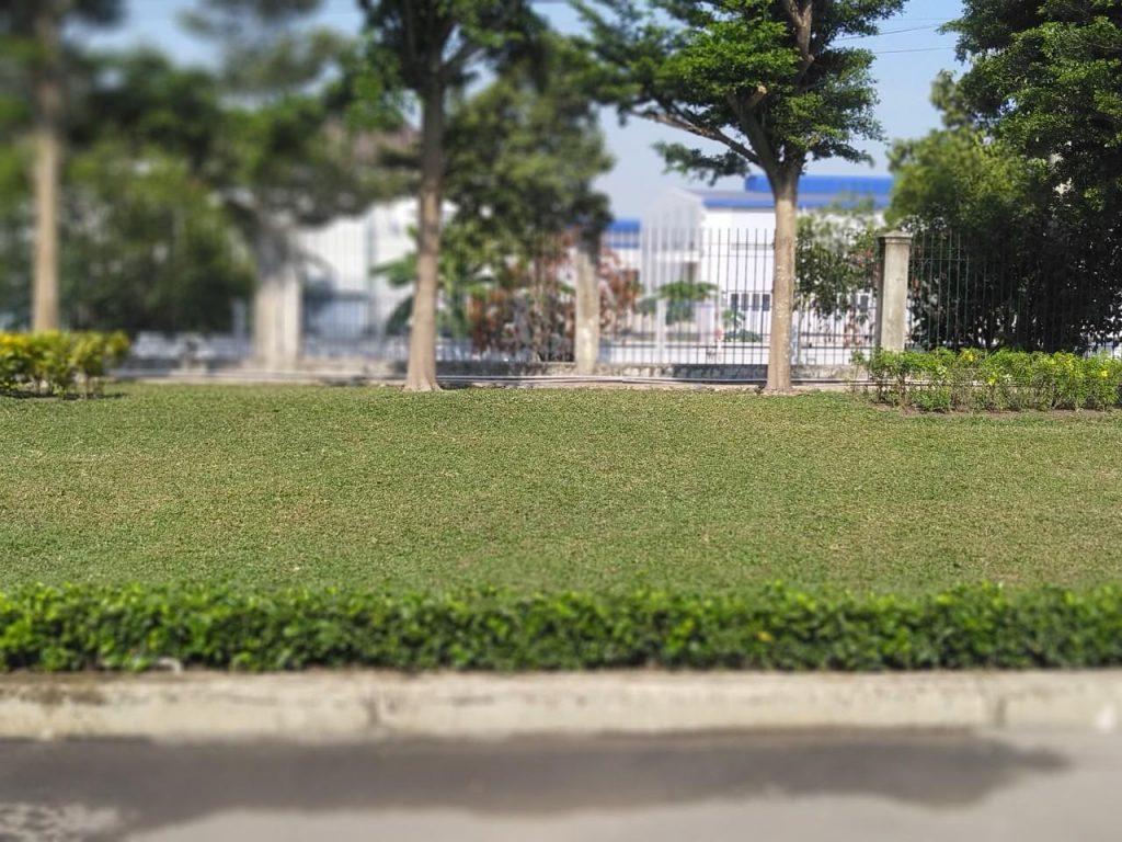 Dịch vụ chăm sóc cây xanh khu công nghiệp Tiền Giang