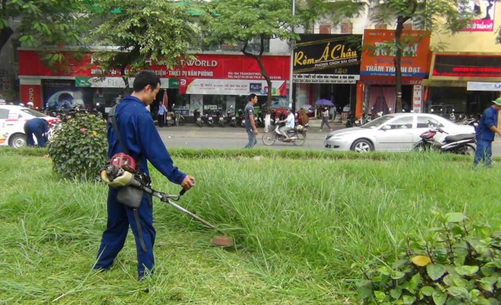 Dịch vụ phát hoang cỏ dại của An Khang