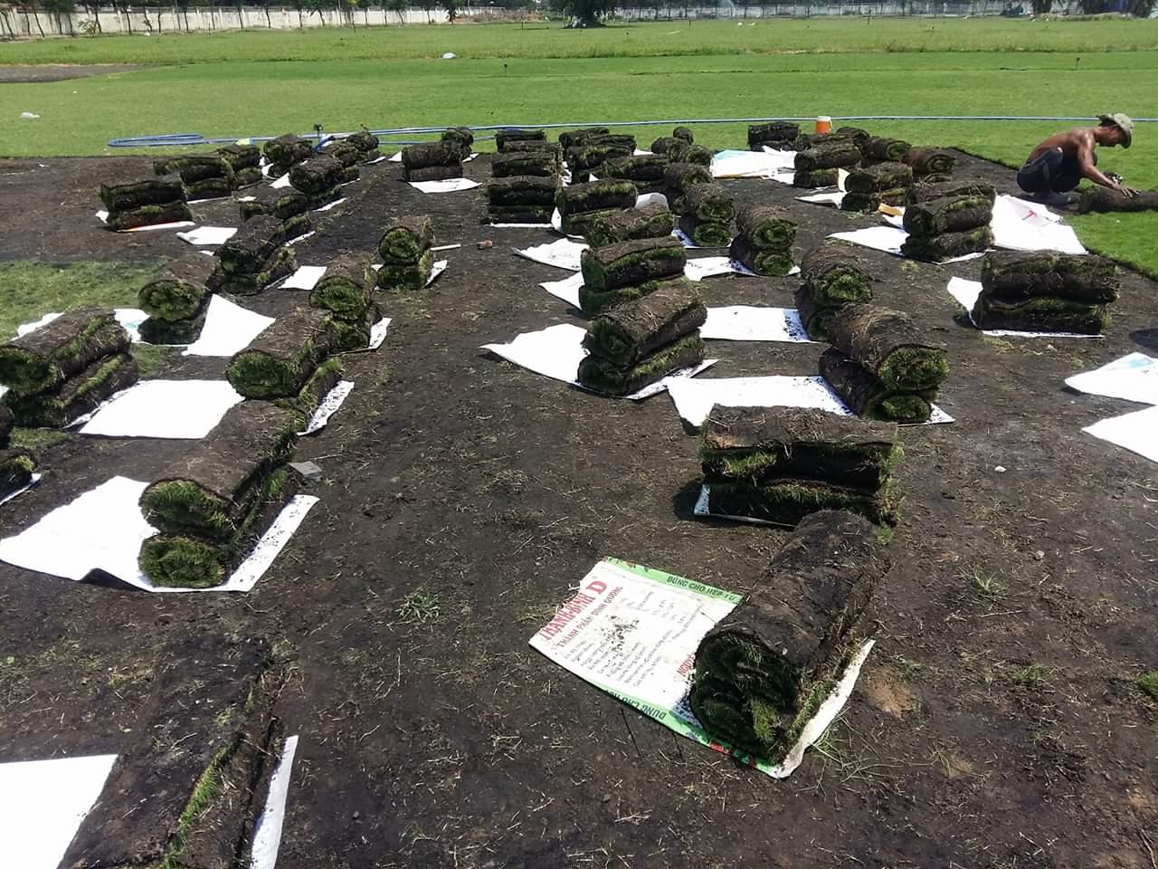 Dịch vụ trồng cỏ xanh do An Khang thực hiện
