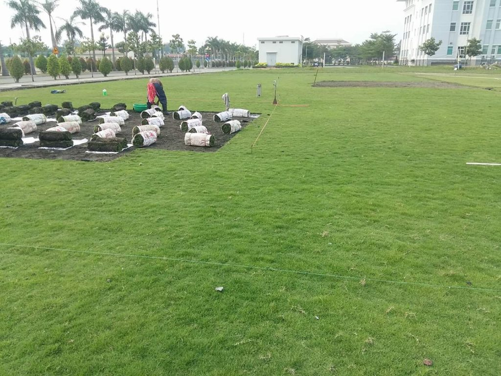 Dịch vụ trồng cỏ xanh KCN Mỹ Tho