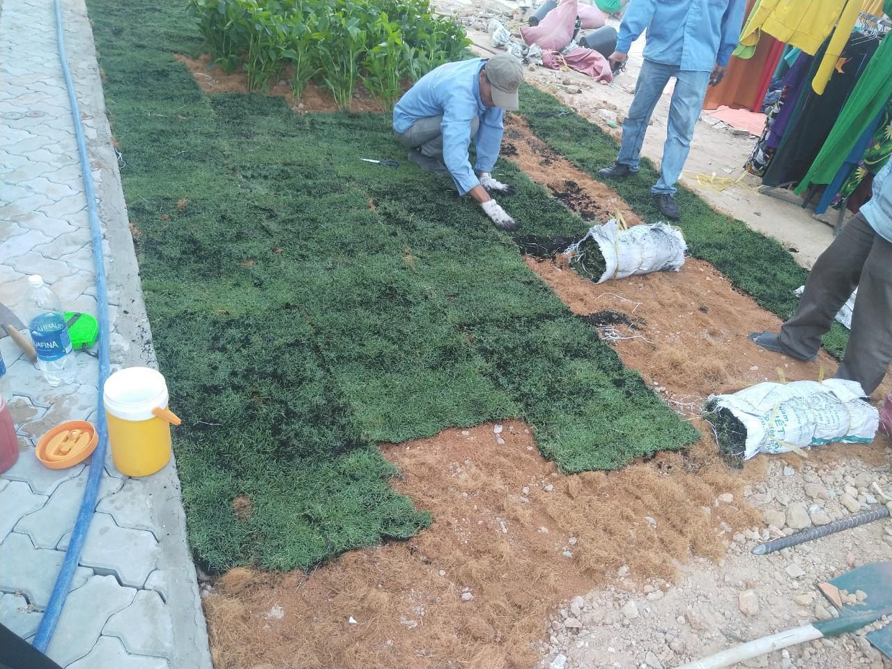 Thực hiện trồng cỏ xanh bởi nhân viên An Khang
