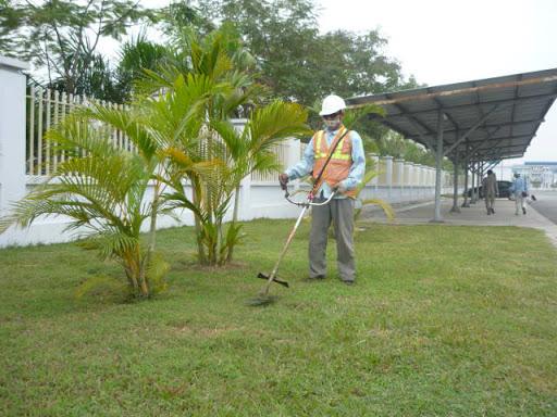 Dịch vụ cắt cỏ tại KCN Mỹ Xuân