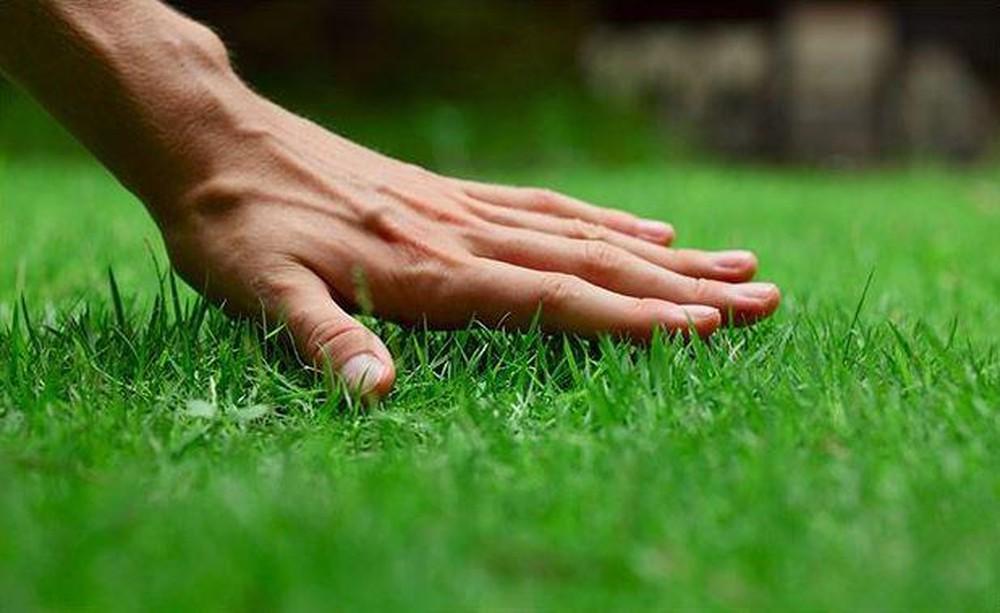 Cắt cỏ kiểng