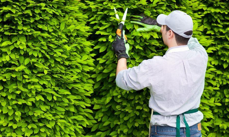 Thực hiện việc cắt tỉa cây