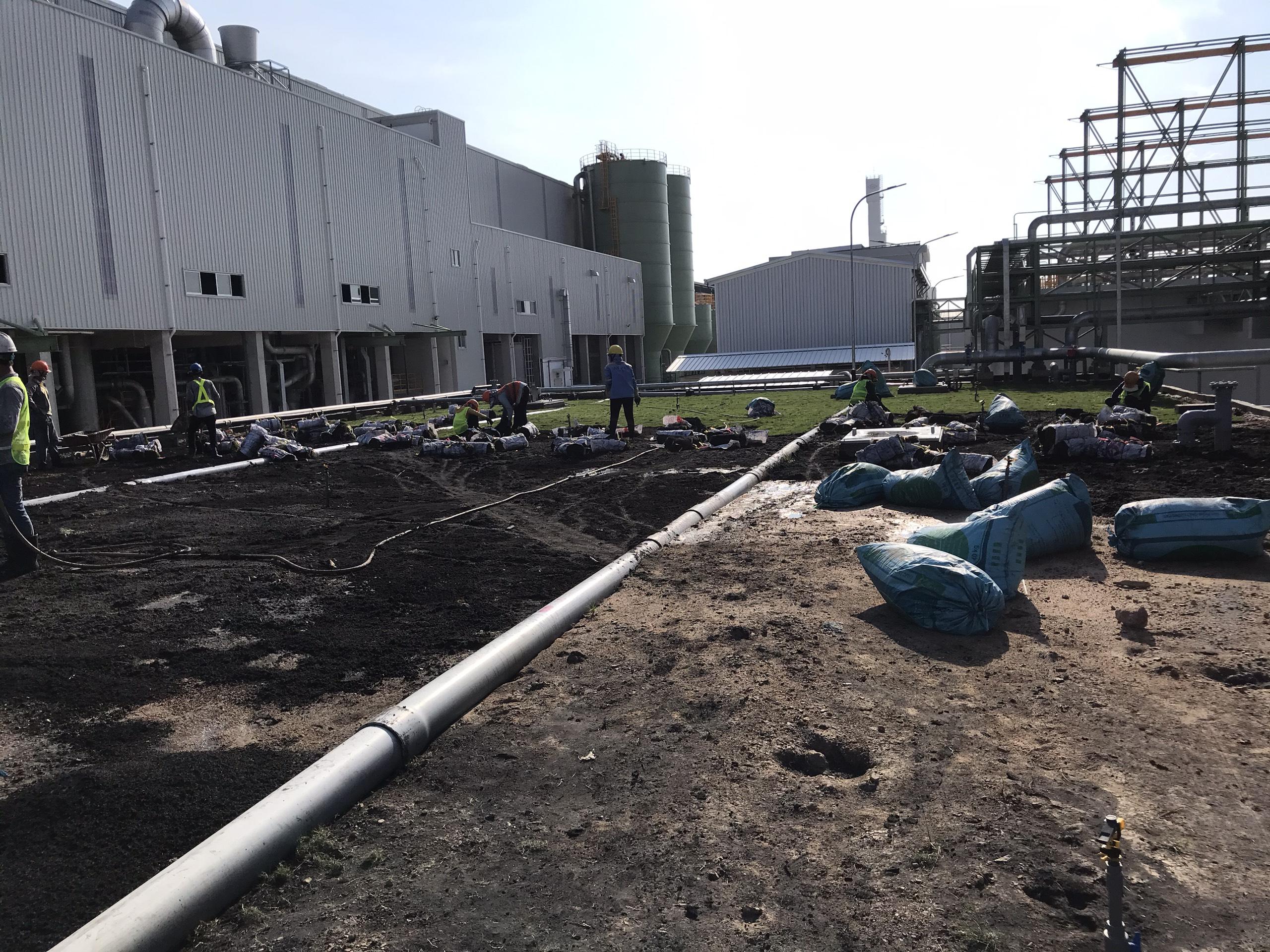 Dịch vụ trồng cỏ tại KCN Long Sơn