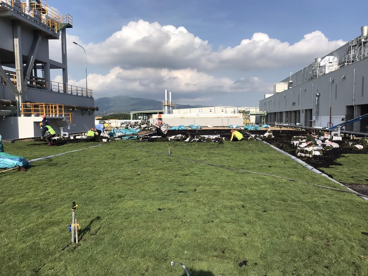 Thi công trồng cỏ cho khu công nghiệp với An Khang