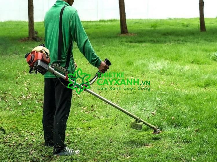 Thực hiện cắt cỏ chuyên nghiệp cùng nhân viên An Khang