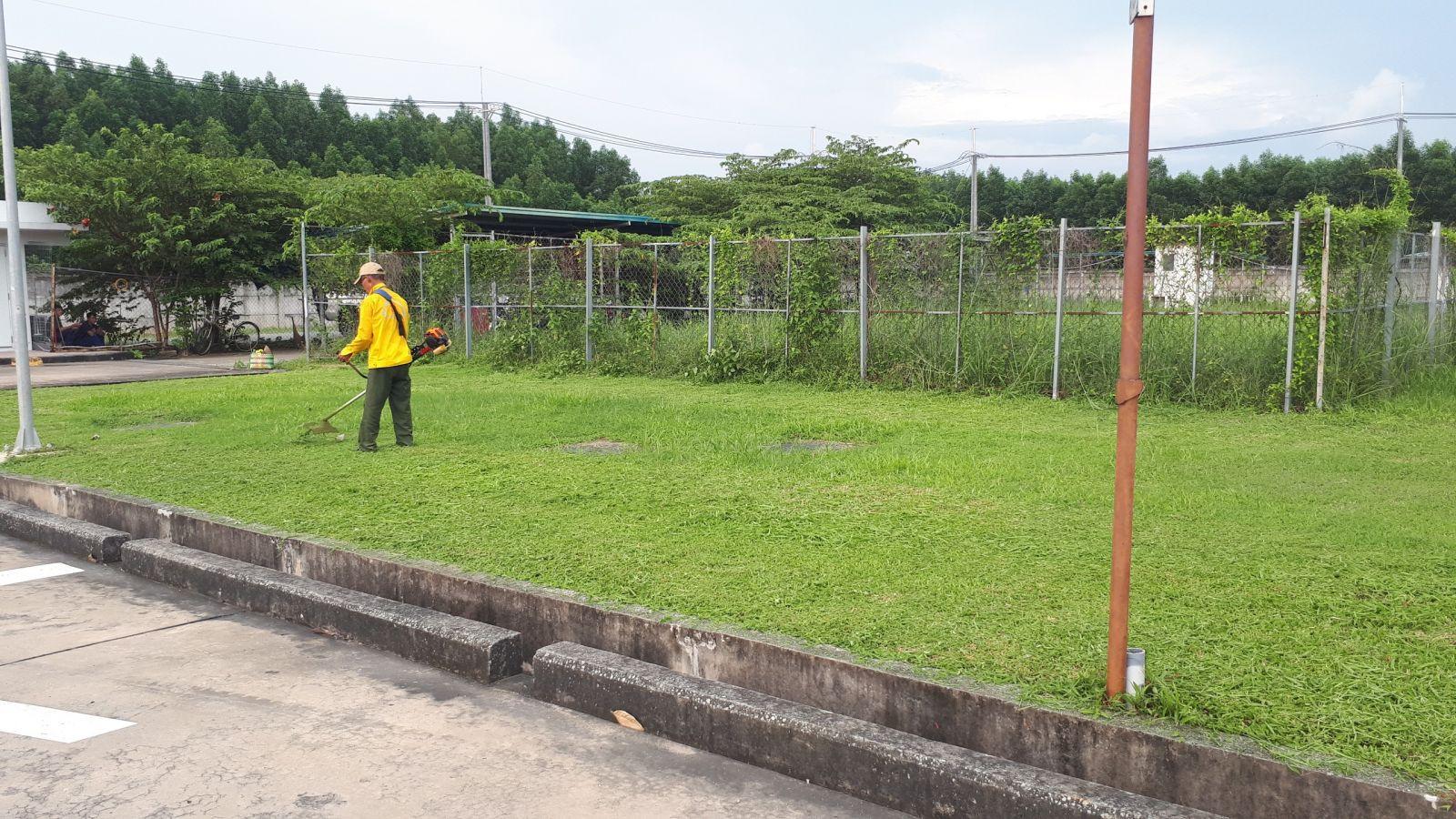 Thực hiện cắt cỏ với nhân viên An Khang