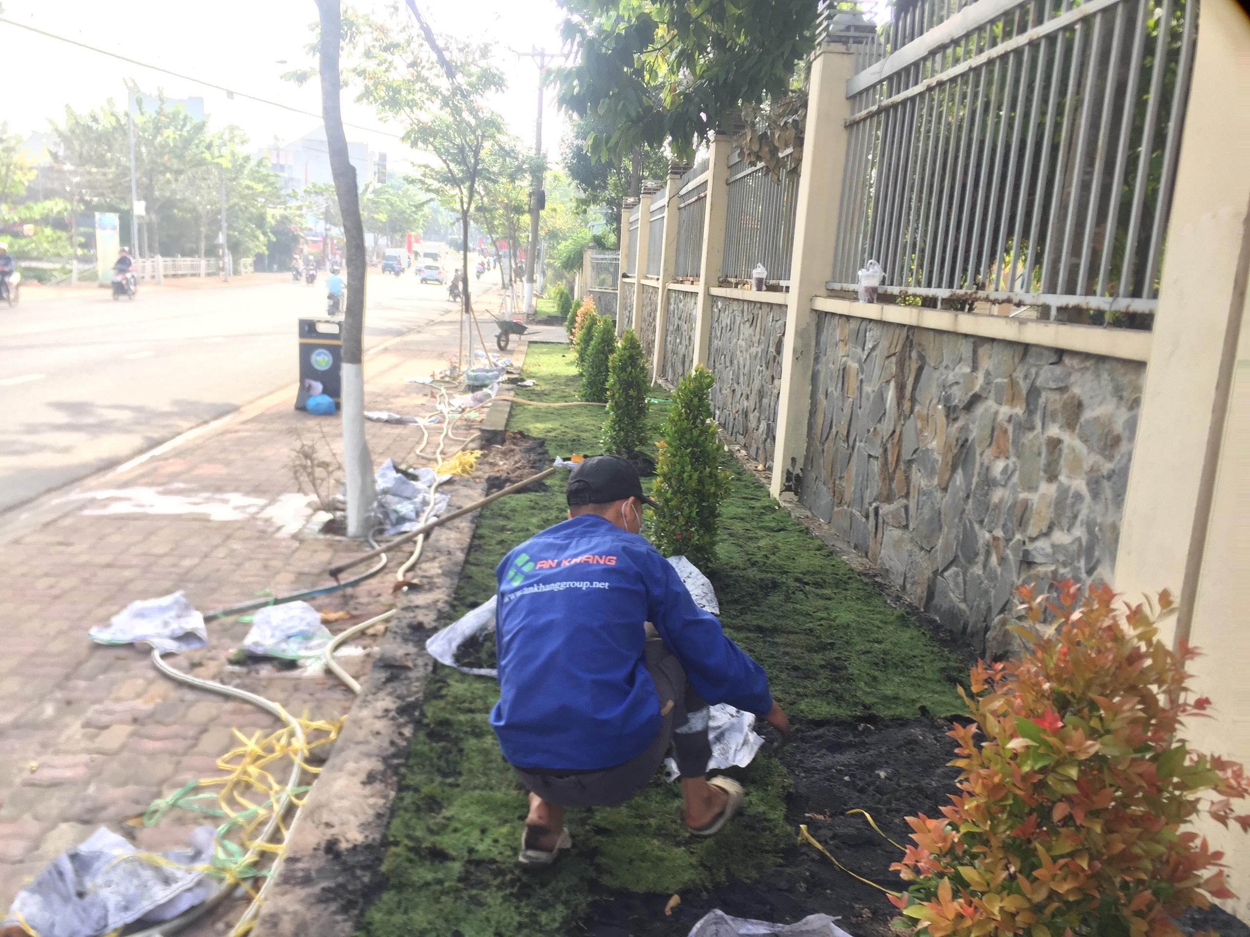 Dịch vụ trồng cỏ KCN Kim Huy