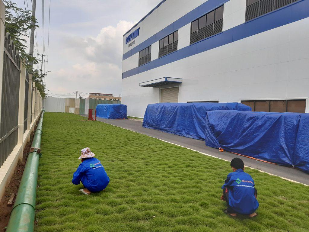 Dịch vụ trồng cỏ KCN Sóng Thần Bình Dương