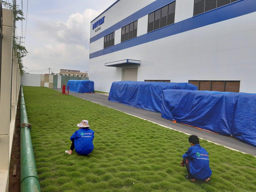 Dịch vụ trồng cỏ tại KCN Thới Hòa