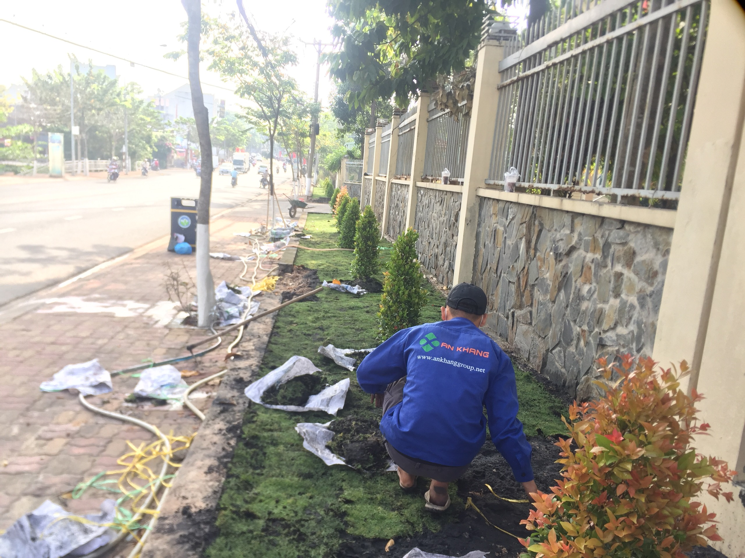 Thực hiện công việc trồng cỏ KCN Mỹ Phước 3 với An Khang
