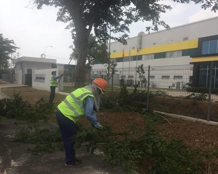Dịch vụ chăm sóc cây xanh KCN Vsip