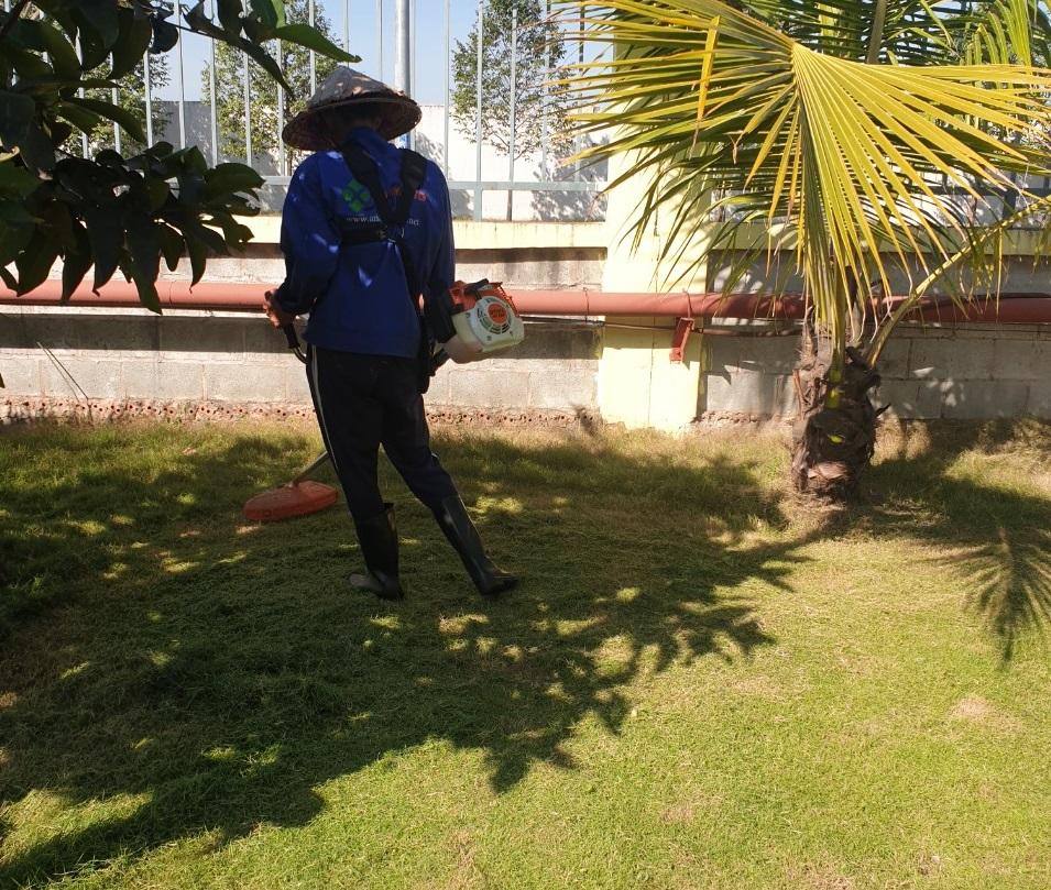 Dịch vụ phát hoang cỏ dại KCN Mỹ Phước của An Khang