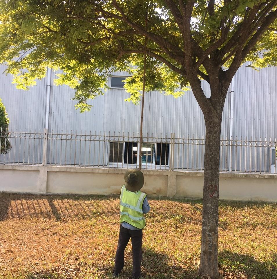 Lợi ích từ Dịch vụ chăm sóc cây xanh KCN Vsip 1