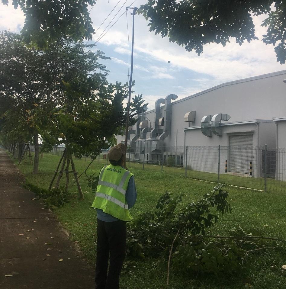 Quy trình dịch vụ chăm sóc cây xanh khu công nghiệp Đồng An do An Khang thực hiện