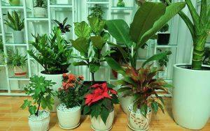 Cho thuê cây xanh văn phòng giá rẻ tại Bình Dương