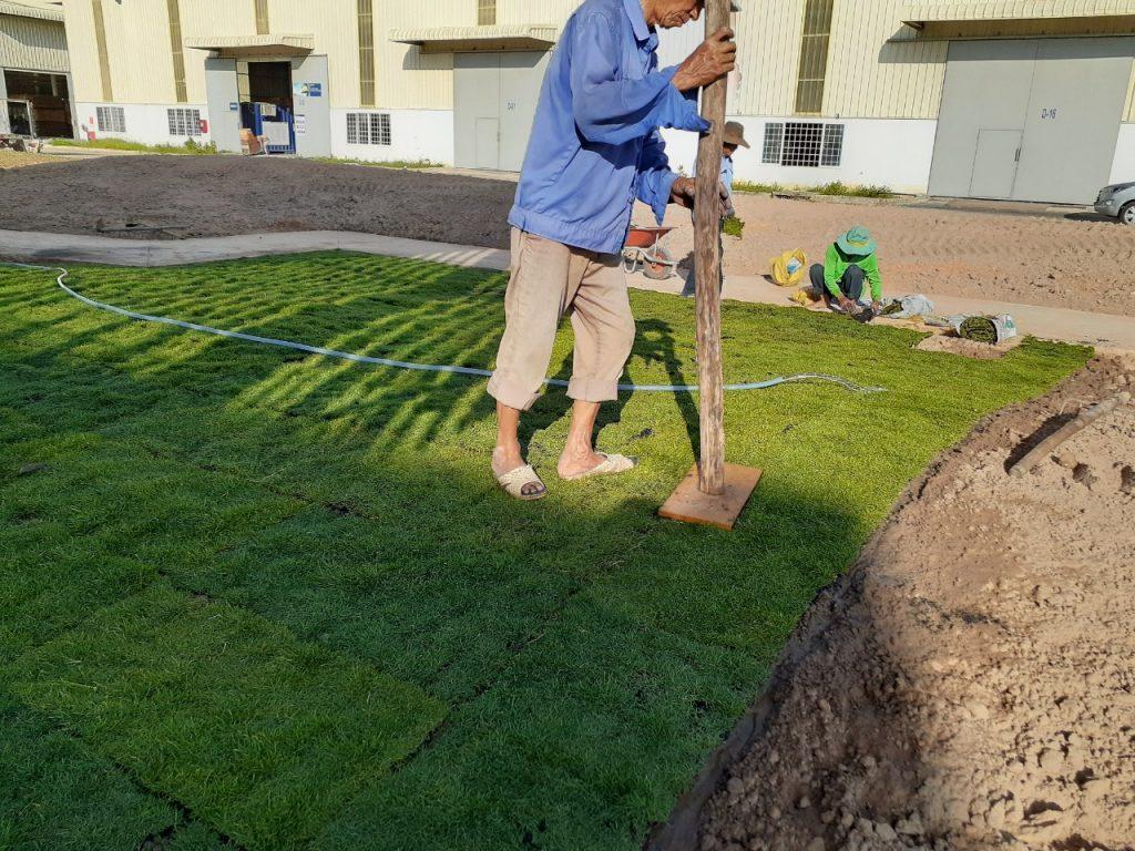 Dịch vụ trồng cỏ KCN VSIP
