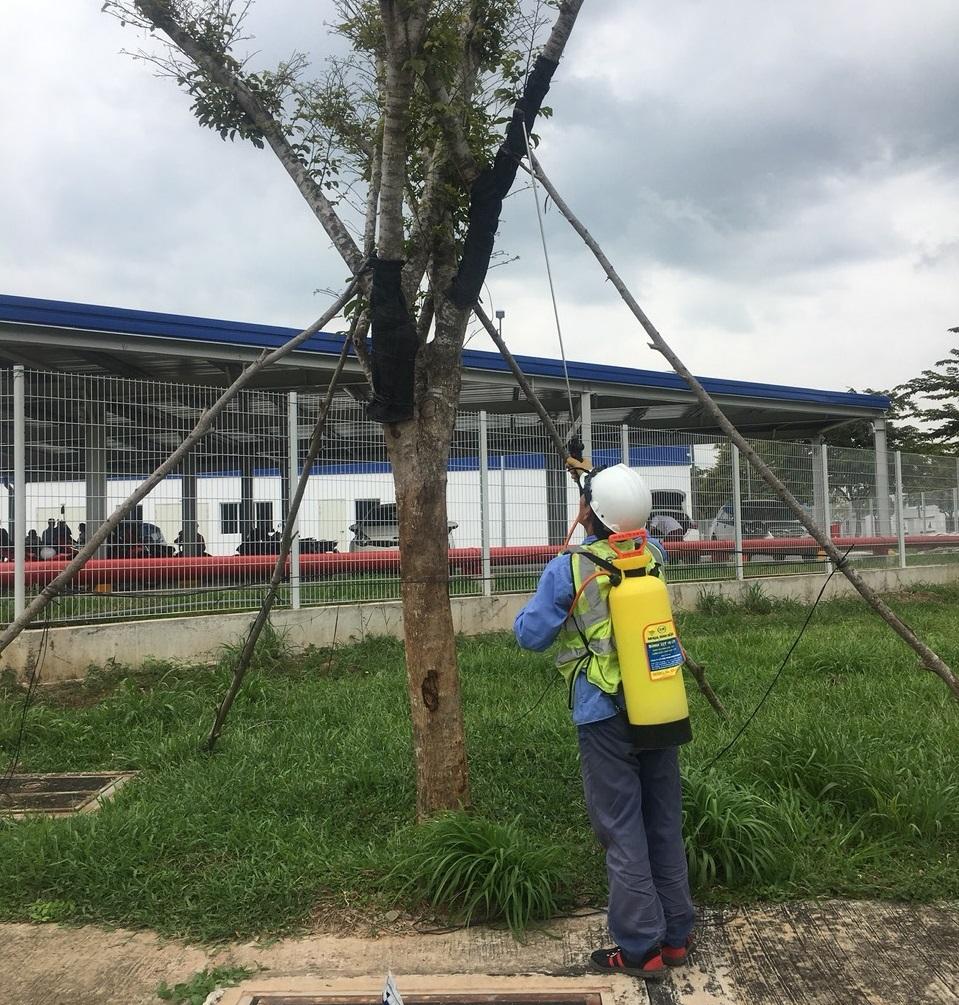 Thuê dịch vụ chăm sóc cây xanh khu công nghiệp Dệt May Bình An uy tín