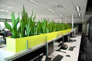 Dịch vụ cho thuê cây xanh văn phòng tại Thuận An
