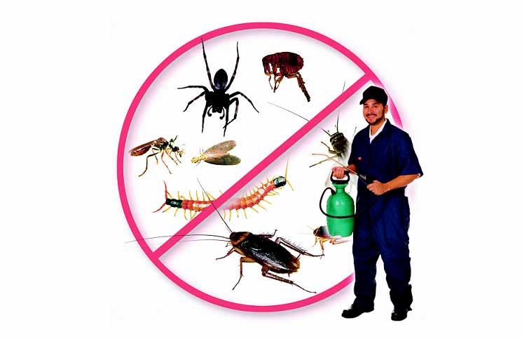 Chọn dịch vụ diệt côn trùng tại Bình Dương uy tín