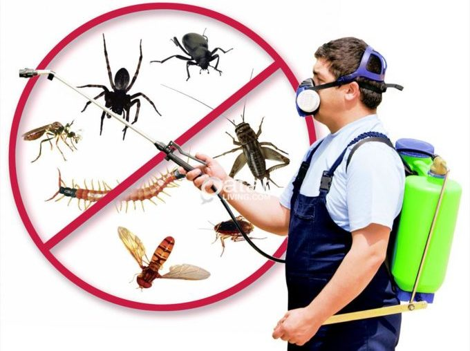 Tìm hiểu về dịch vụ diệt côn trùng tại Bình Dương