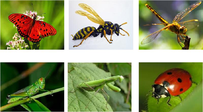 Tìm hiểu về côn trùng