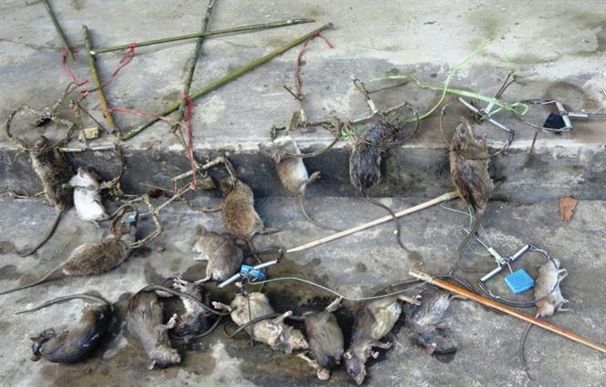 Dịch vụ diệt chuột trong nhà tại Bình Dương uy tín