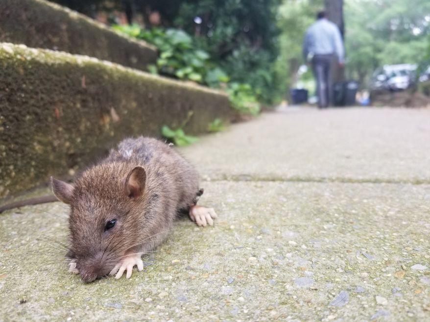 Dịch vụ diệt chuột trong nhà tại Bình Dương
