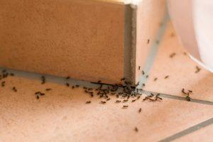 Dịch vụ diệt kiến ba khoang tại Bình Dương uy tín